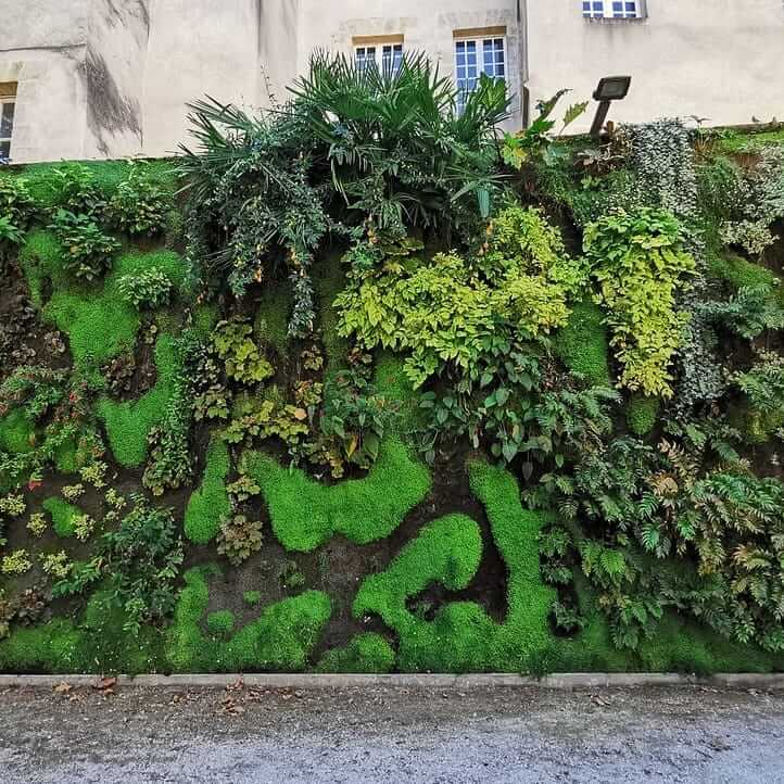 Le mur végétal du square vinet